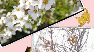 『4月 新たな1歩』