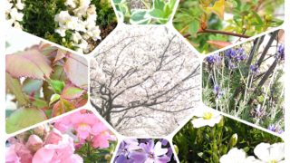 『 花 の季節』